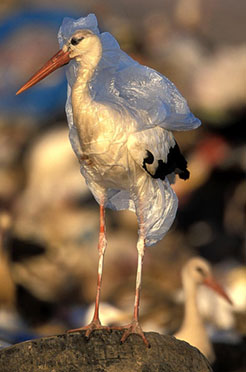 gf_plastic_bird