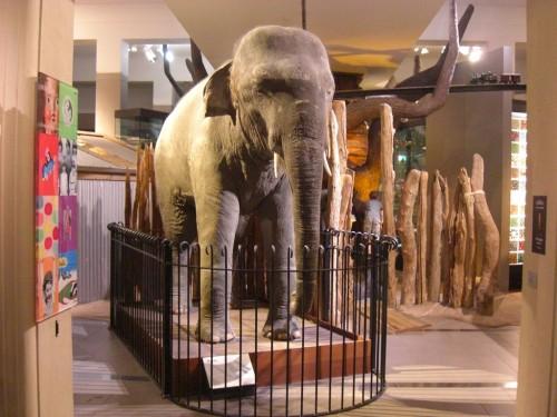 AM-elefant