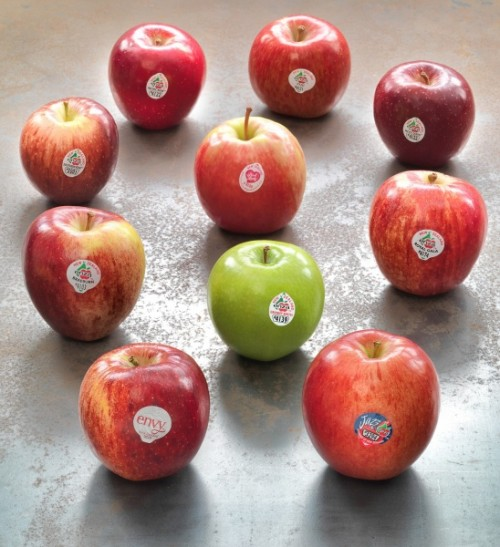 apple-varieties